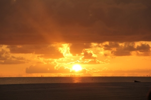 FORT MYERS 2014 311